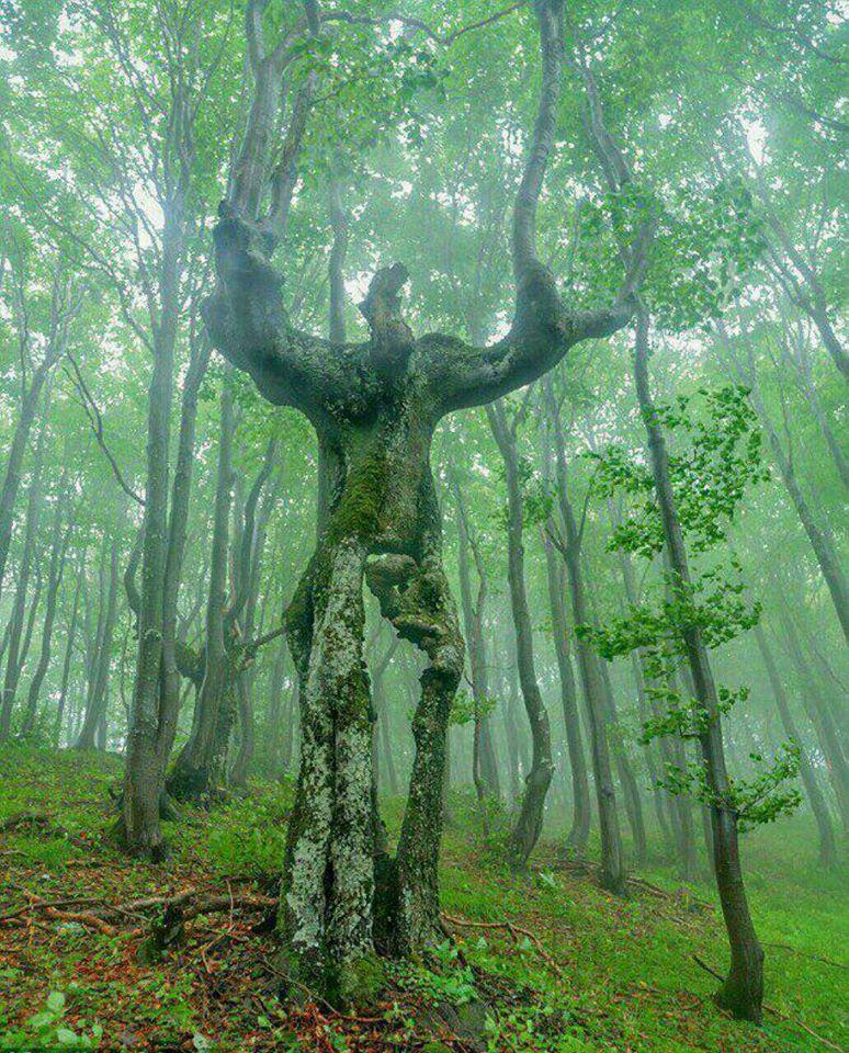 L'Homme des bois, dans toute sa majesté!