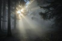 sunbeam-1547273_640