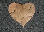 heart-742712_640(2)